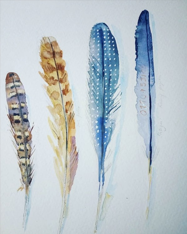 feathers watercolour painting